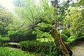 Erythrina crista-galli - Jardim Botânico da Universidade de Coimbra - Coimbra, Portugal - DSC08926.jpg