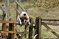 Eskdale and Ennerdale Foxhounds (31181572295).jpg