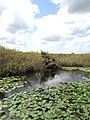 Everglades View - panoramio (10).jpg
