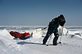 Expedition Bergans Baikal 2010, pulling the sleds.jpg
