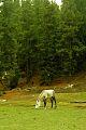 Fairy meadows plain.jpg