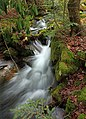 Fall Creek (Revisited) (3) (11659133265).jpg
