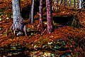 Fall Trees Color Enhanced Saturation DCEN-7.jpg