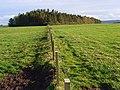 Farnham Plantation - geograph.org.uk - 591963.jpg