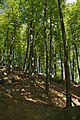 Felsenmeer Wald2.jpg
