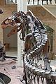 Fernbank Museum - Atlanta - Flickr - hyku (6).jpg