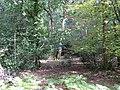 Ferny Crofts woodland.jpg