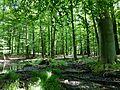 Feuchte-Senke-im-NSG-Grumsiner-Forst-Redernswalde.jpg