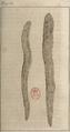 FileAndry - De la génération des vers (1741), planche p. 52.png