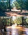 Finnis River.jpg