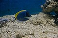 Fish at Kavaratti Aquarium (5800220514).jpg