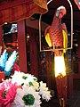 Flaming Parrot (590584434).jpg