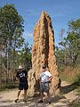 Flickr - brewbooks - Cathedral Termite Mound.jpg