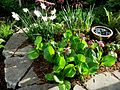 Flickr - brewbooks - Our Front Garden in Late Afternoon Light (1).jpg