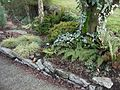 Flickr - brewbooks - Our front garden in winter.jpg