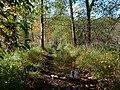 Flooded path in the Teufelsbruch swamp 10.jpg
