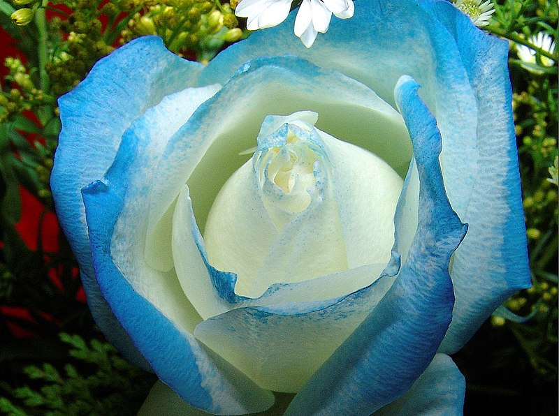 File:Flor azul 1 REFON.JPG