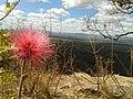 Flor do Cerrado no Itiquira.jpg