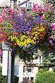 Flower-basket-lamppost-victoria-BC.jpg