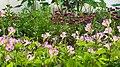 Flower garden on Tet 2021.jpg