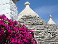 Flowers and Trulli.JPG