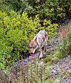 Follow the trail (7041719035).jpg