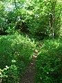 Footbridge - geograph.org.uk - 843872.jpg