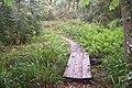 Footbridge in Birch Wood (1) - geograph.org.uk - 1499134.jpg