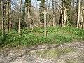 Footpath Junction in Roydon Woods - geograph.org.uk - 395889.jpg