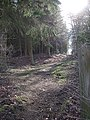Footpath into woods near Longslade Cottage - geograph.org.uk - 367485.jpg