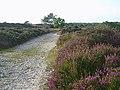 Footpath on Dunwich Heath - geograph.org.uk - 192248.jpg