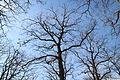 Forêt départementale de Beauplan sous la neige 2012 10.jpg
