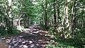 Forêt de Darvault - 40.jpg