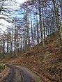 Fordie Hill wood - geograph.org.uk - 364229.jpg