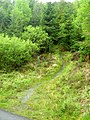 Forest Footpath at Kirroughtree - geograph.org.uk - 431788.jpg