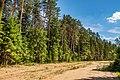 Forest in Minsk (June 2020) 9.jpg