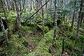 Forest in Okuchichibu Mountains 01.jpg
