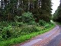 Forest near Fardross Mountain - geograph.org.uk - 894851.jpg