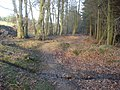 Forest path near Meeroak Farm - geograph.org.uk - 655125.jpg