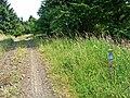 Forest road near Scotch Kershope - geograph.org.uk - 209050.jpg