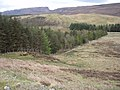 Forestry in Strath Canaird - geograph.org.uk - 788429.jpg