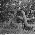 Fotothek df ps 0001139 Bäume.jpg