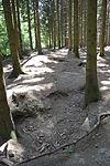 Foxholes - Bois Jacques - Bastogne - 02.jpg