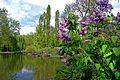 Frühling im Bad Mergentheimer Kurpark. 25.jpg