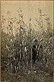 Fresno County, Cal (1904) (14597212768).jpg