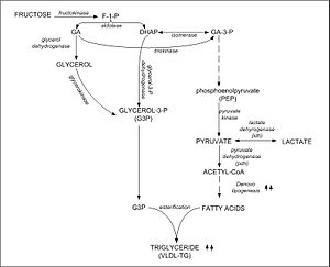 Fructolysis - Figure 3: The metabolic conversion of fructose to triglyceride (TG) in the liver