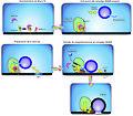 Fusion secuencia.jpg