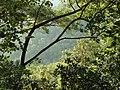 GREEN CANOPY^SABARIMALA KERALA INDIA - panoramio.jpg