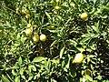 Gardenology.org-IMG 0777 hunt07mar.jpg