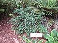 Gardenology.org-IMG 2340 rbgs11jan.jpg